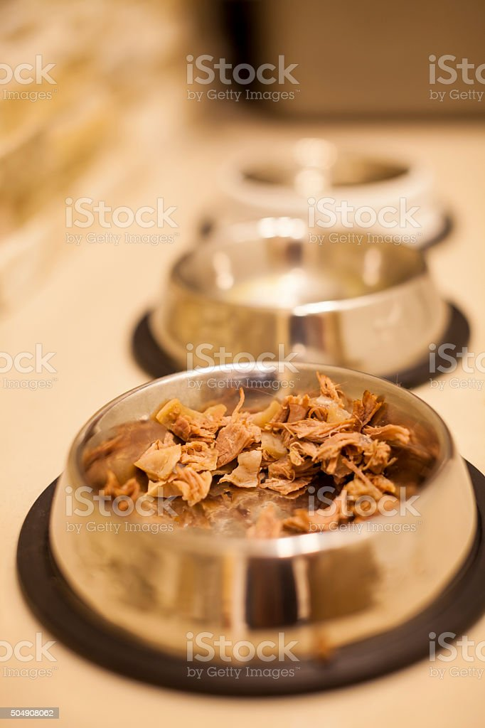 Cat food stock photo