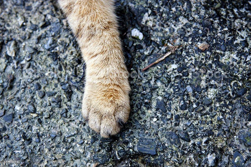 cat foot royalty-free stock photo