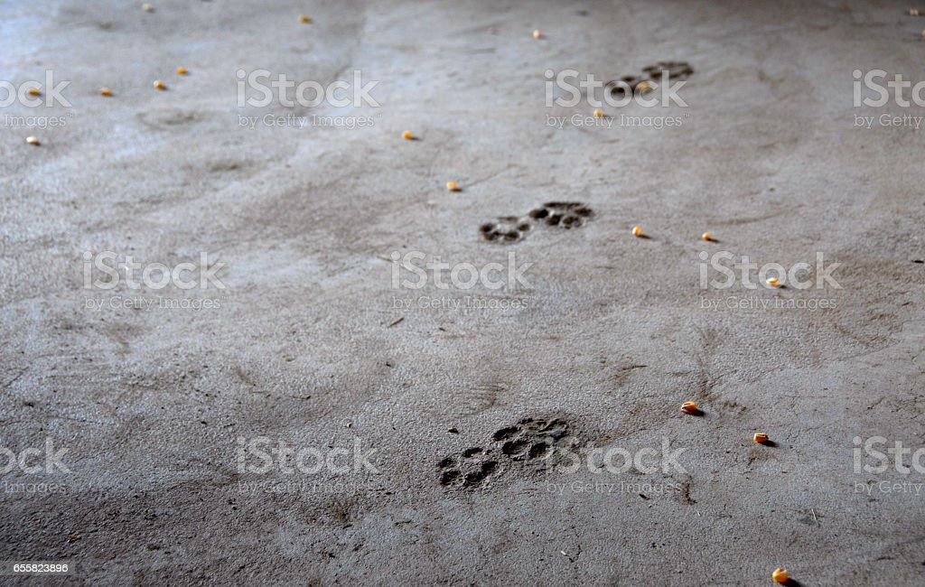 Cat Footprints across a Dusty Floor stock photo