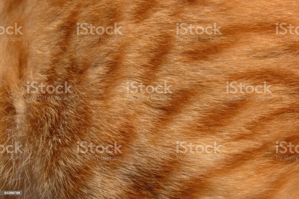 Cat Fur royalty-free stock photo