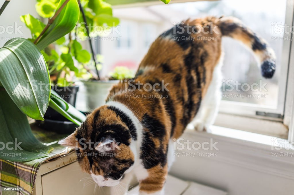 Cat going jumping down from windowsill by plants stock photo
