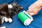 Cat hair roller