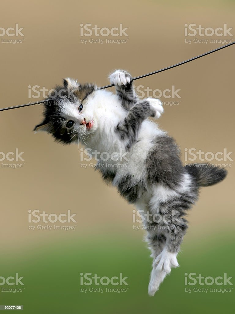 cat hanging on a wire royalty-free stock photo