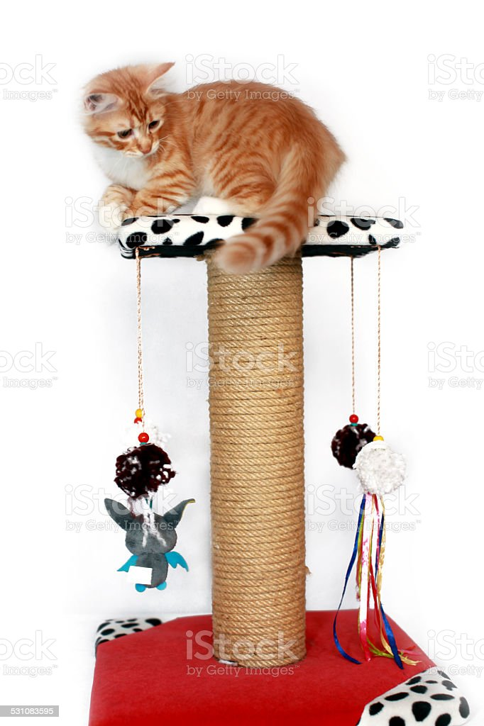 Cat hanging on Scratching Post stock photo
