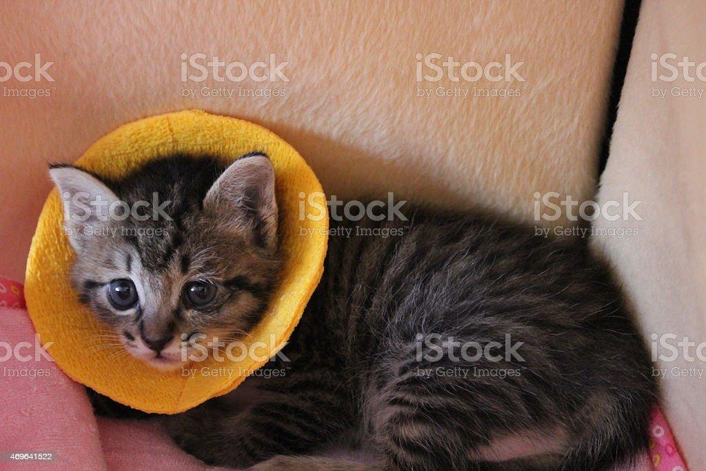 Cat having the conjunctiva stock photo