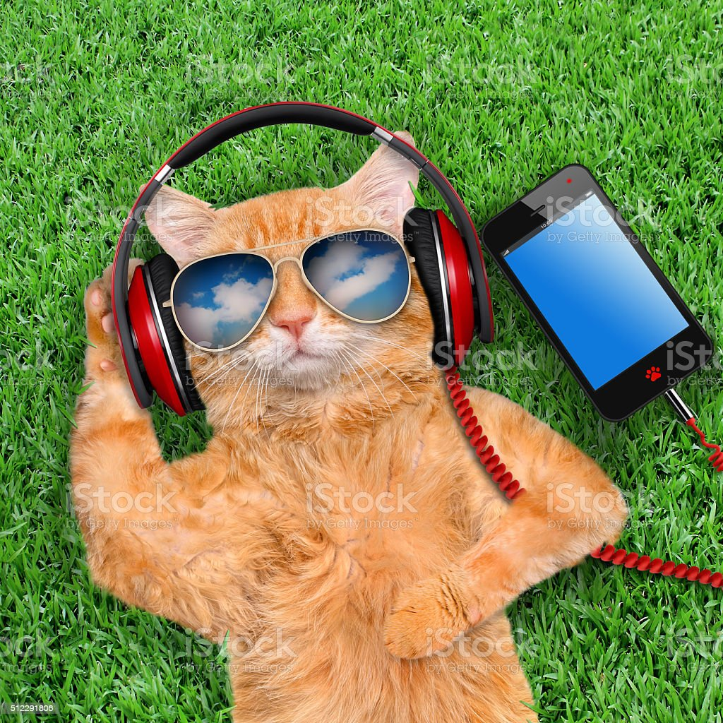 Cat headphones wearing sunglasses relaxing in the grass. stock photo