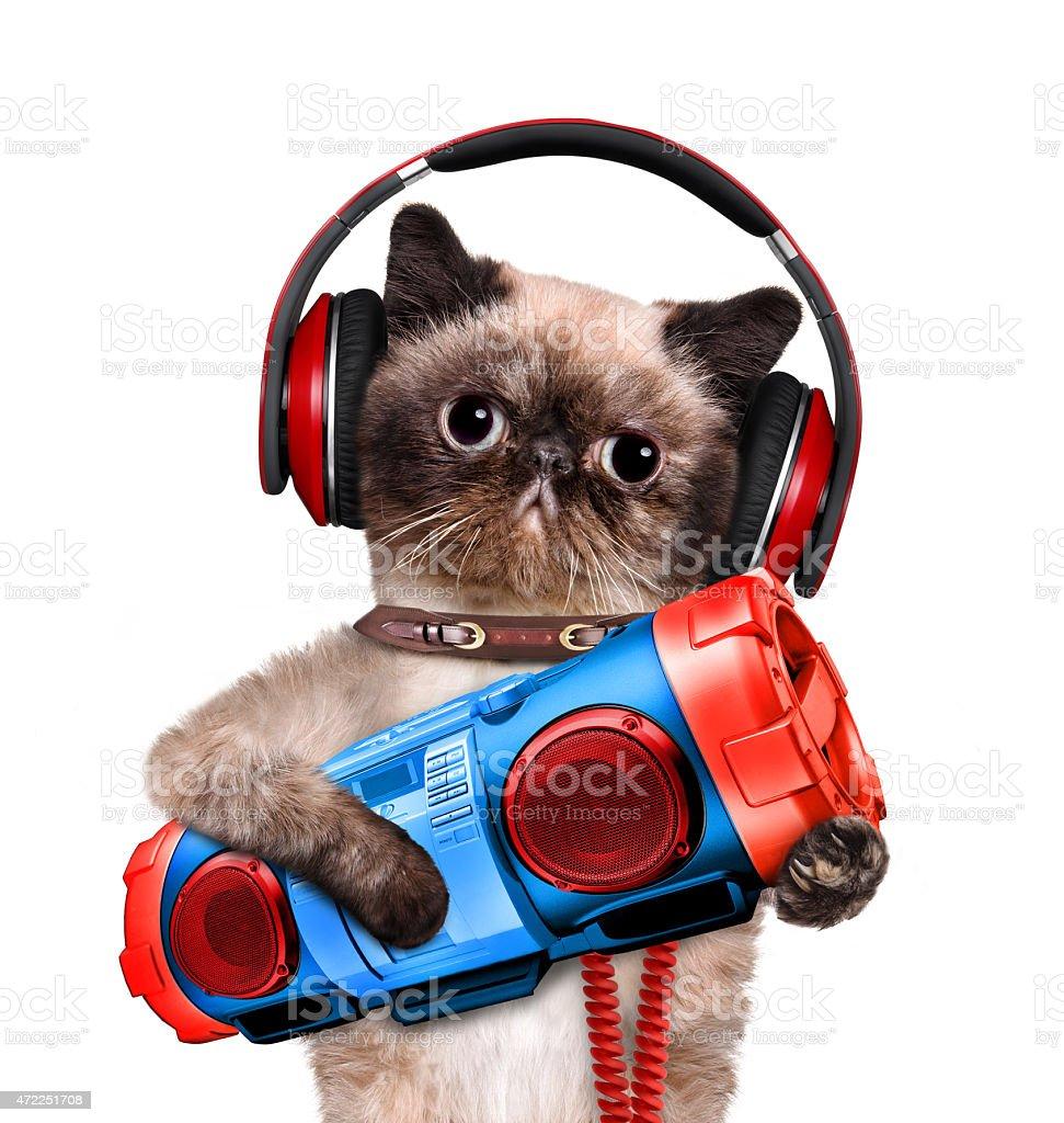 Cat headphones with tape recorder. stock photo
