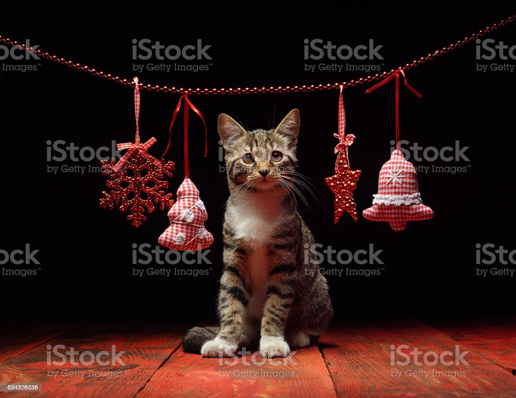 Cat helps decoration Christmas background stock photo