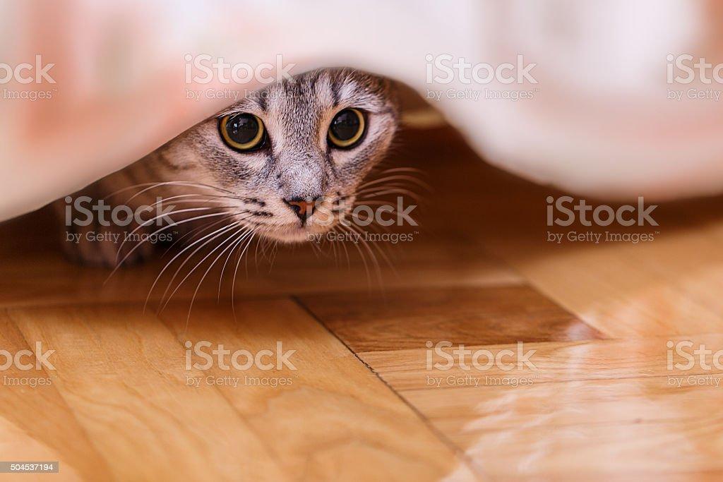 cat hides stock photo