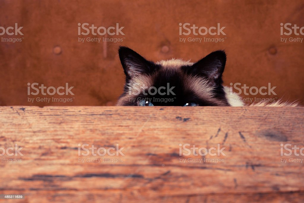 Cat hiding behind a table stock photo