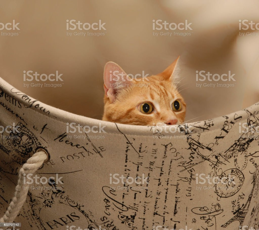 Cat Hiding in Hamper stock photo