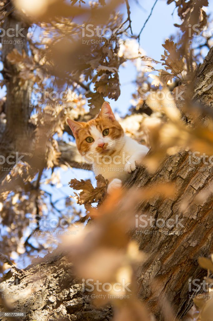 Cat hiding out in the tree up high stock photo