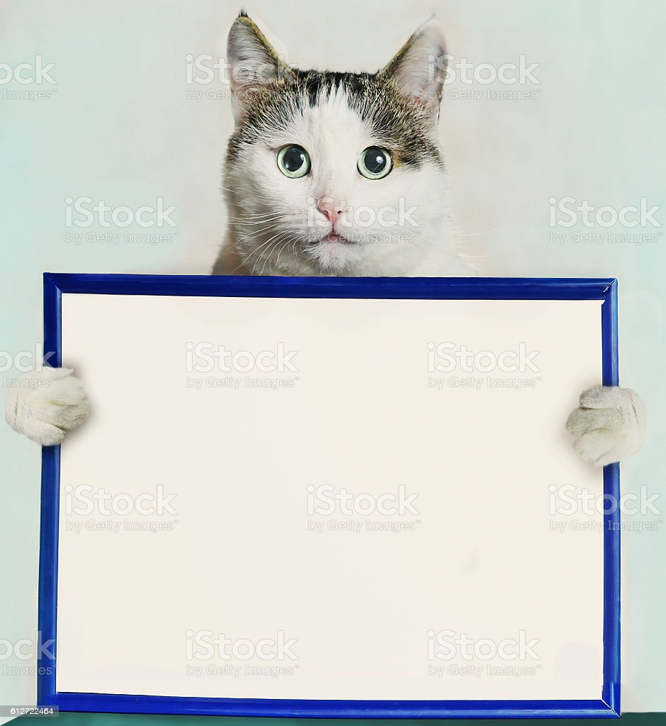 cat hold blue frame with blank empty white paper stock photo