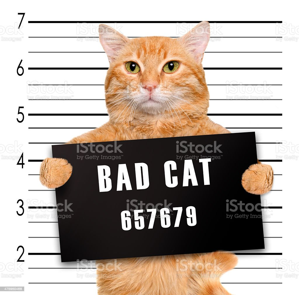 Cat holding a banner offender on white background. stock photo