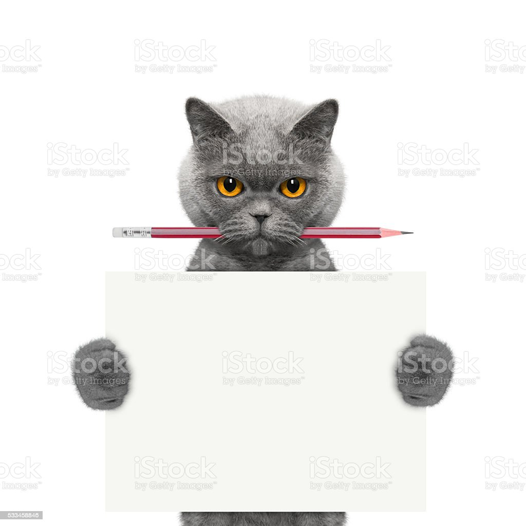 cat holding a pencil and blank stock photo
