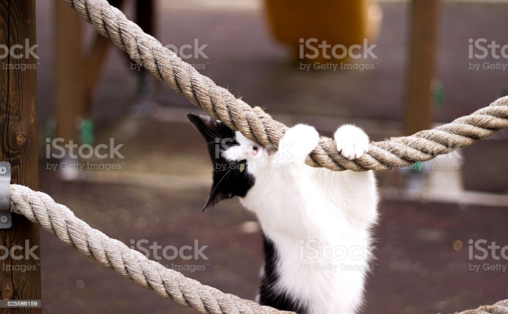 Cat Holding the Rope stock photo