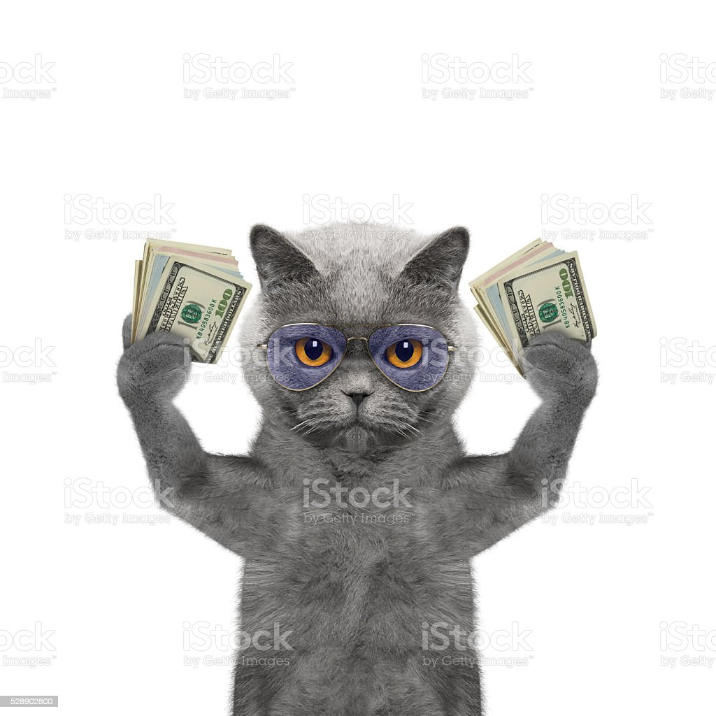 Cat holds in its paws a lot of money stock photo