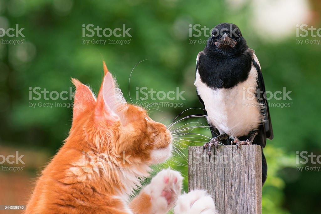 Cat hunted a bird stock photo