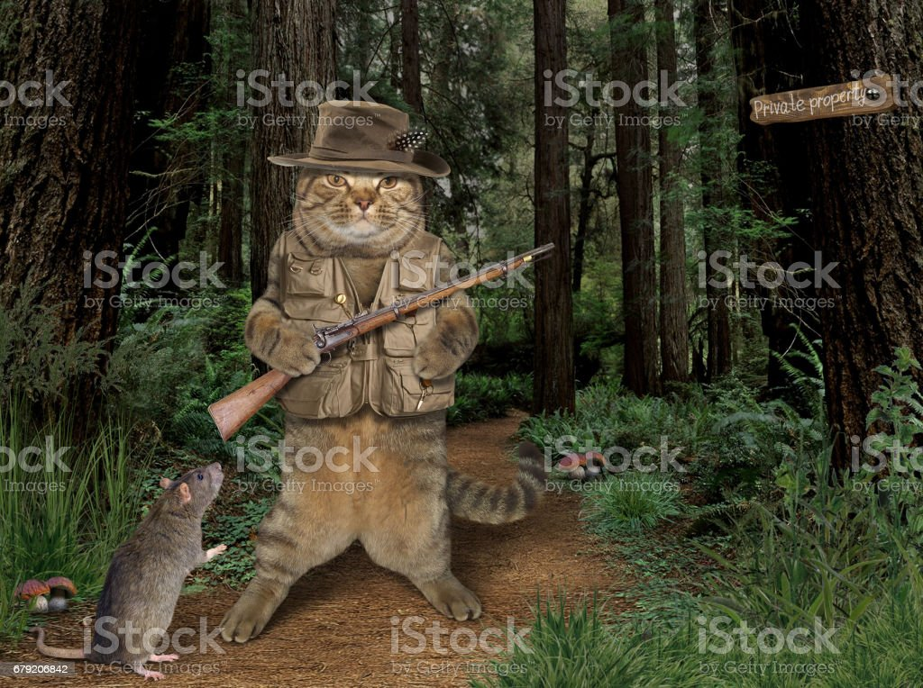 Cat hunter and rat stock photo