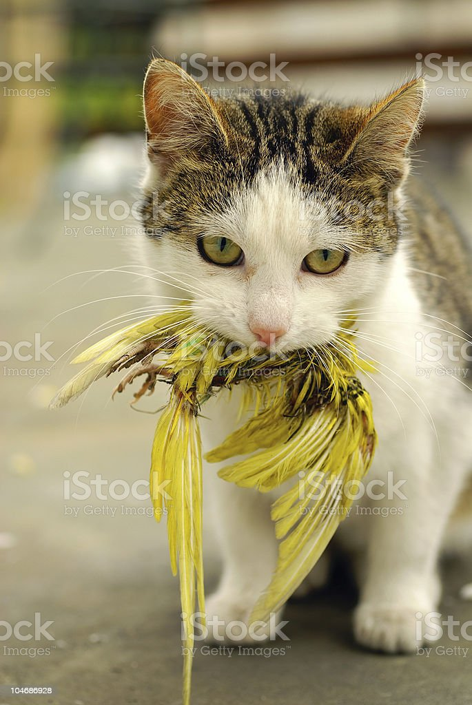 Cat - hunter royalty-free stock photo