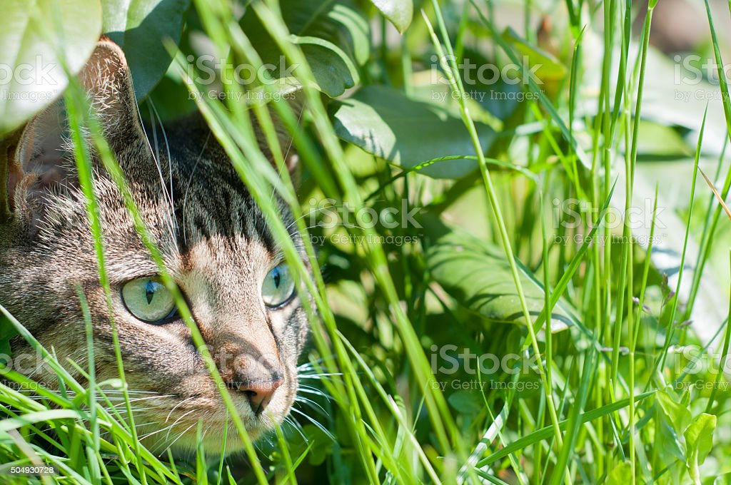 Cat hunting backyard stock photo