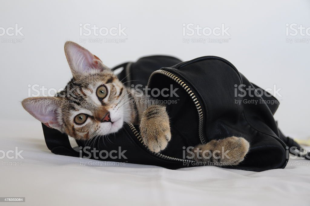 Cat in a bag stock photo