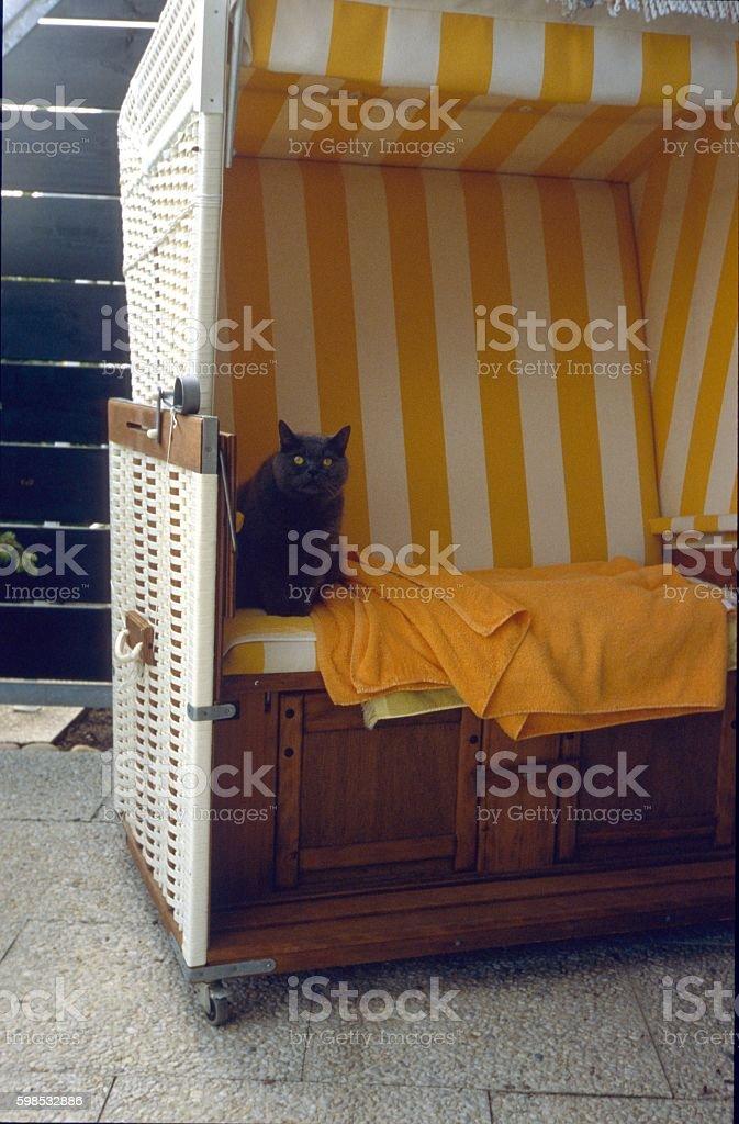 Cat in a beach chair stock photo