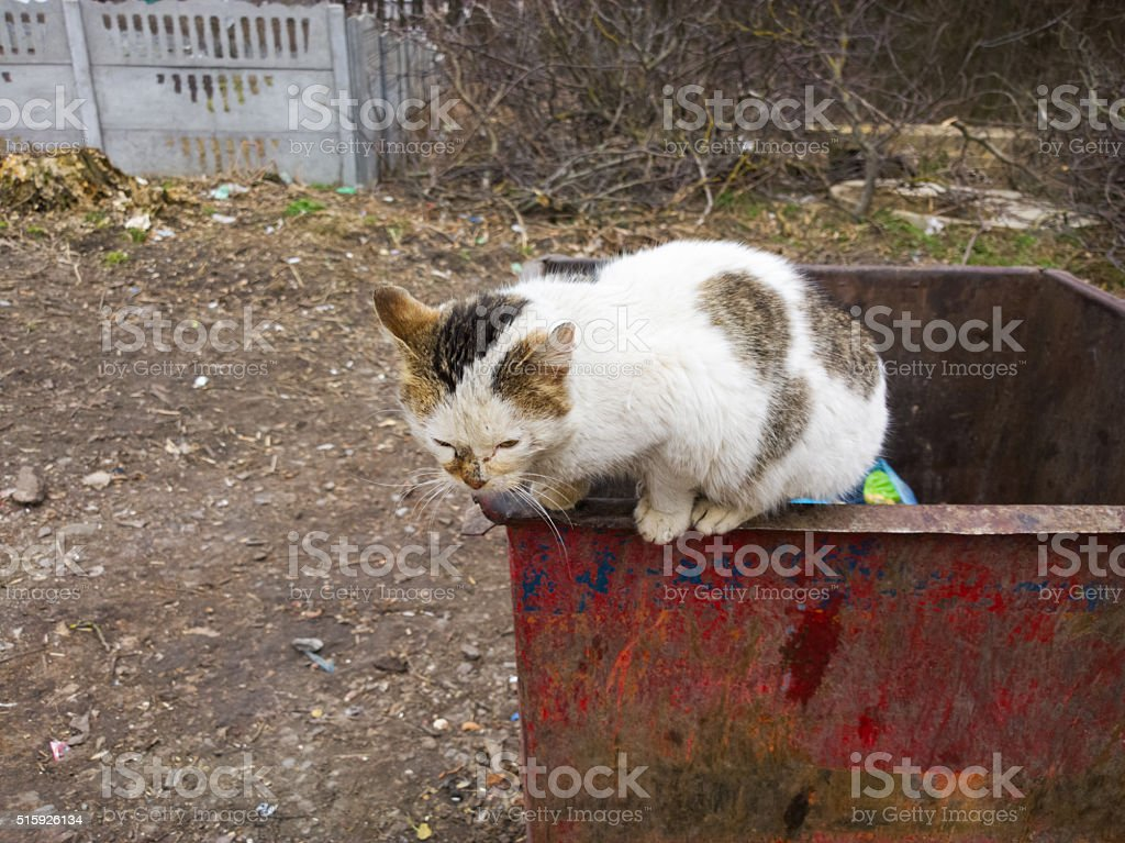 Cat in a dumpster. stock photo