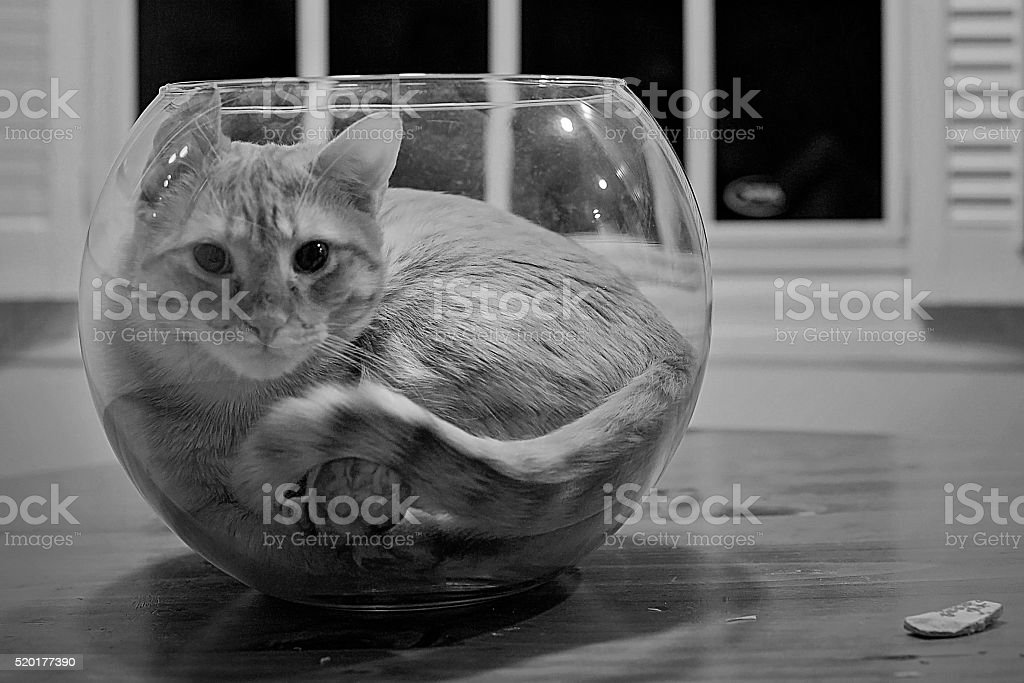 Cat in a fish bowl stock photo