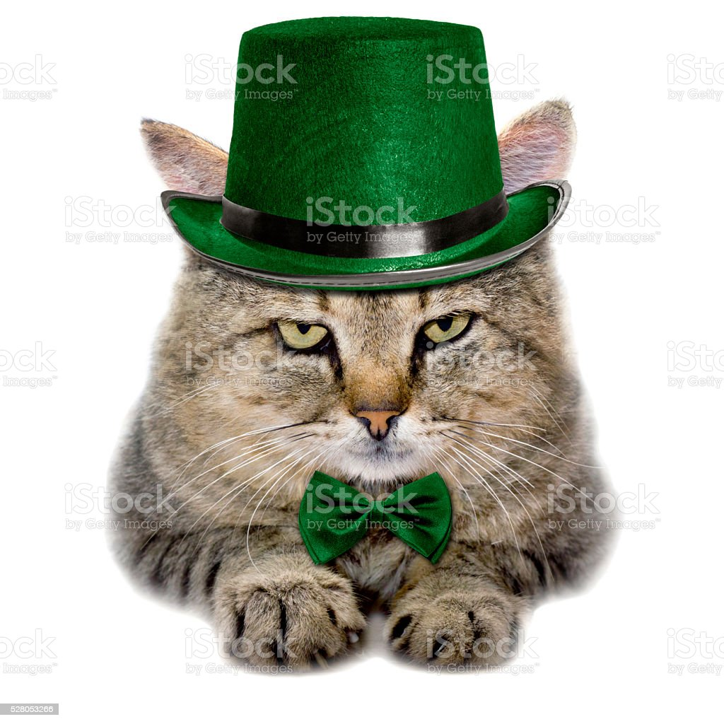 cat in a green hat and tie butterfly isolated stock photo