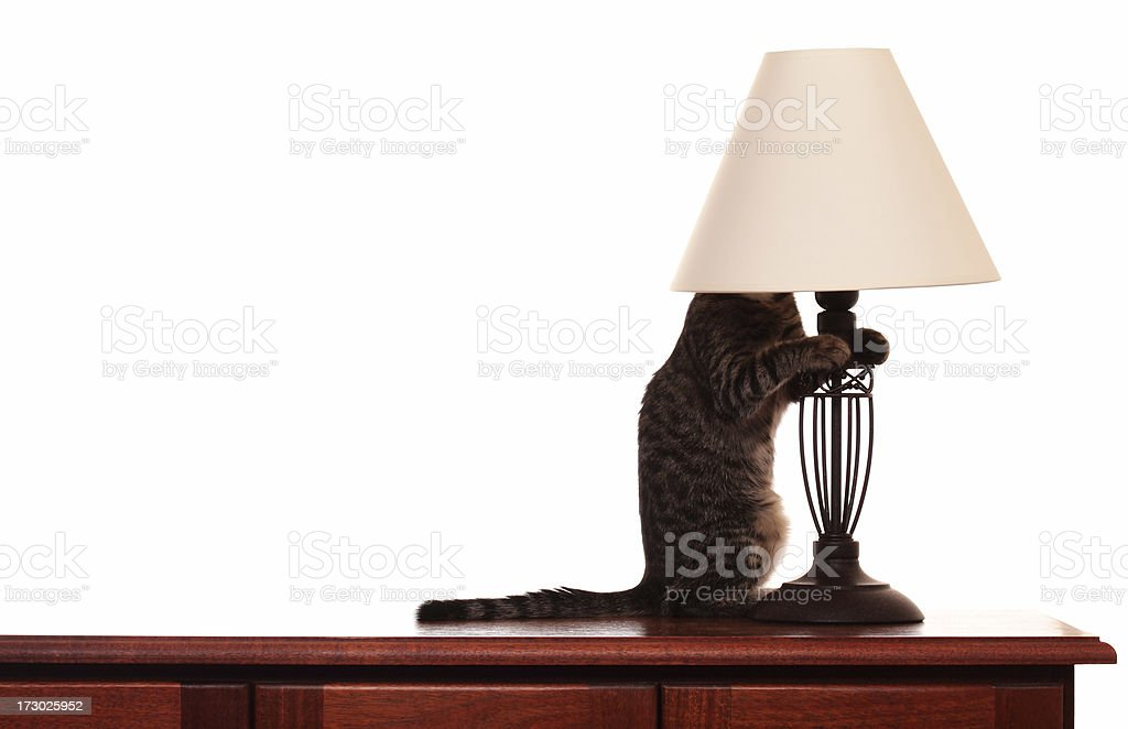 Cat In  A  Lamp Shade stock photo