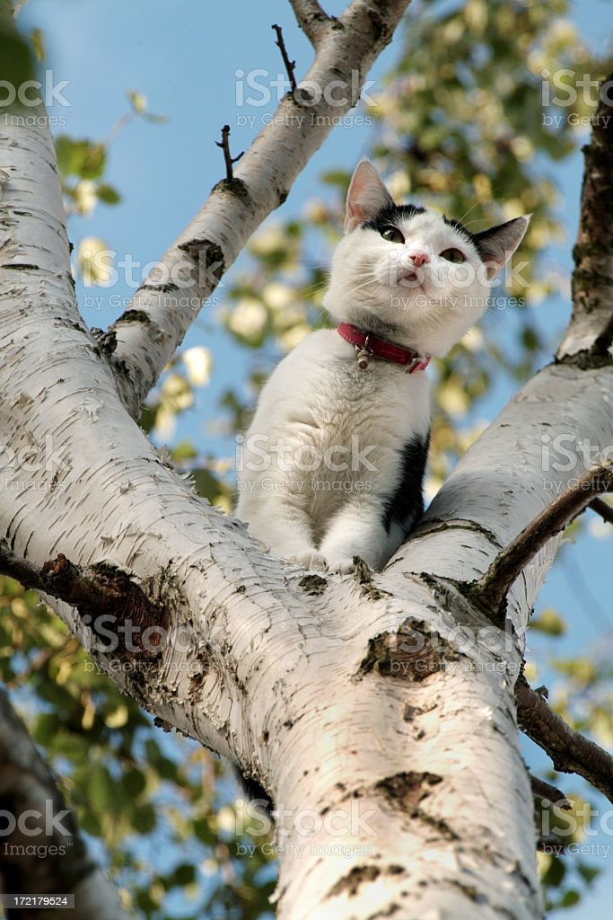 Cat in a Tree (close-up) royalty-free stock photo