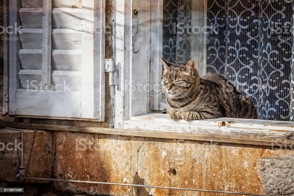 Cat in a Window in Dubrovnik Croatia stock photo