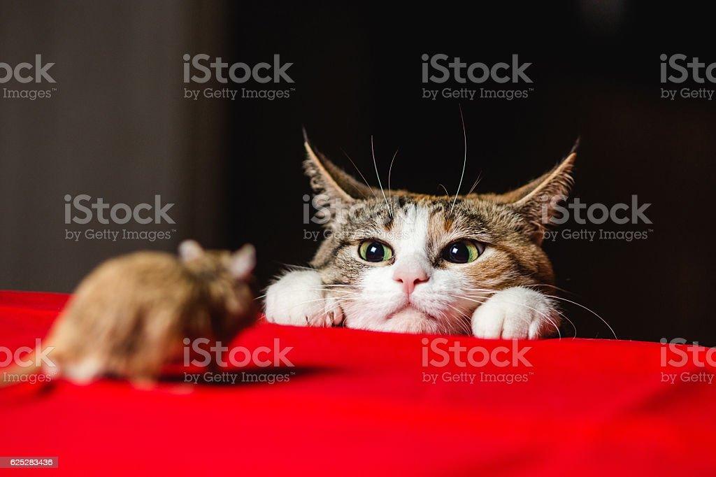 Cat in an ambush on a mouse hunt. Deadlock. stock photo