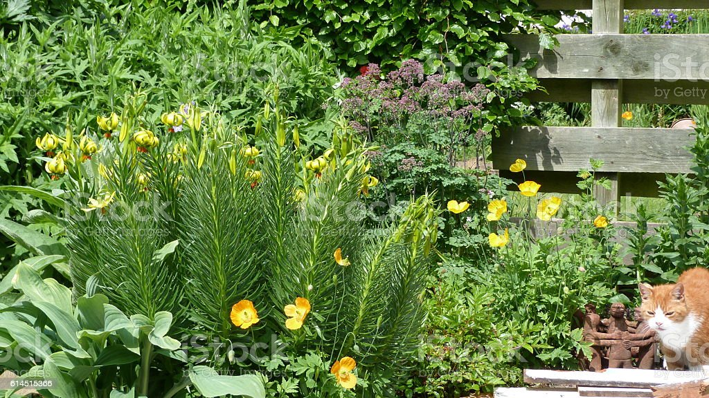 Cat in an herbaceous border stock photo