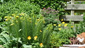 Cat in an herbaceous border