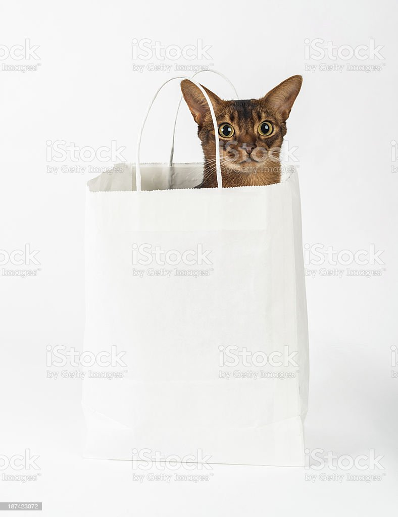 Cat in Bag stock photo