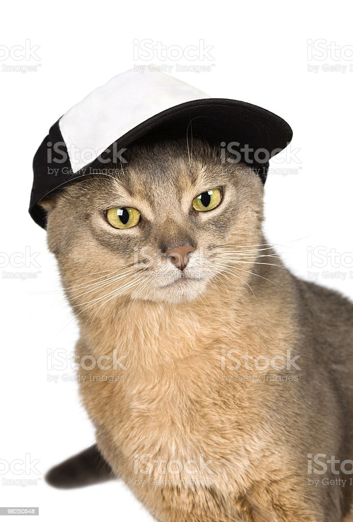 Cat in baseball cap royalty-free stock photo