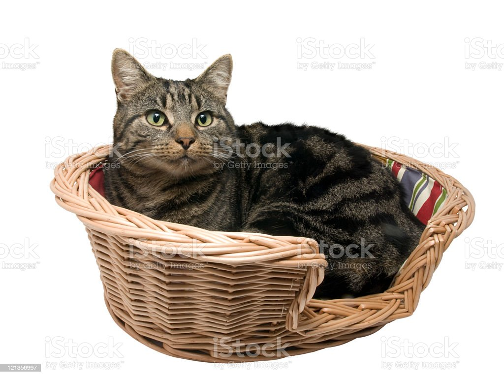 Cat in Basket royalty-free stock photo