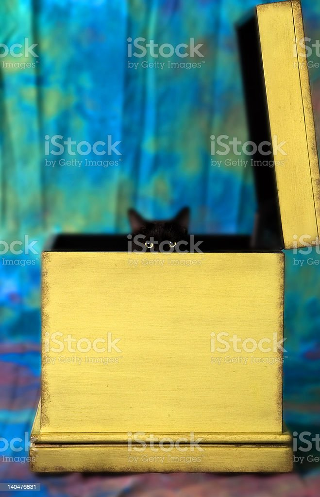 Cat in Box royalty-free stock photo