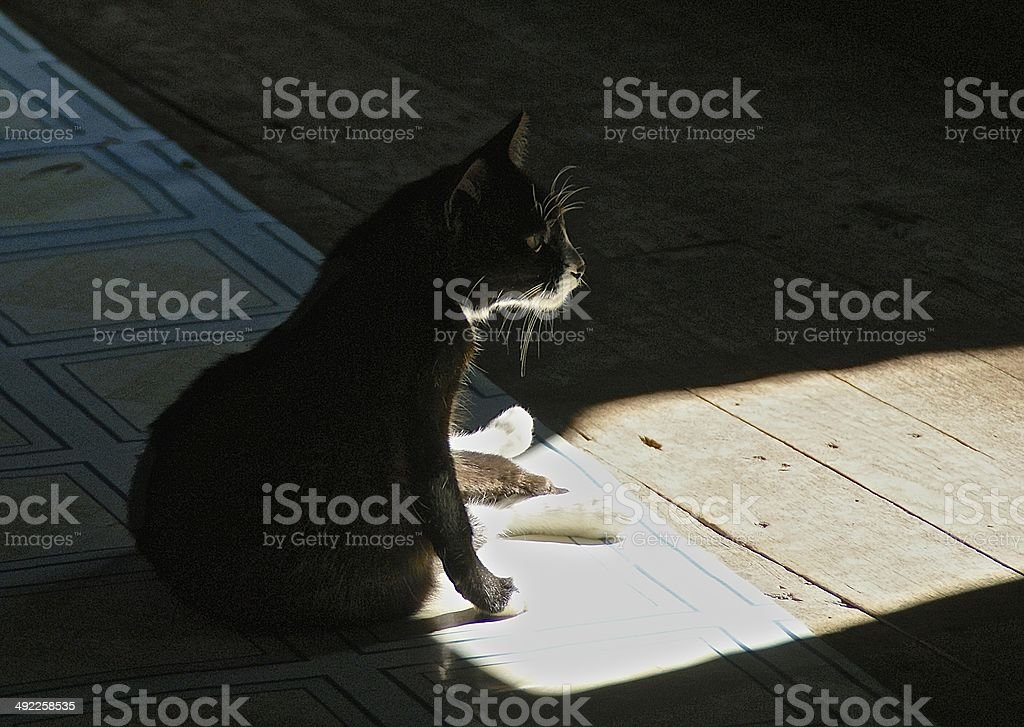 Cat in Burmese monastery, sitting in a ray of sunlight royalty-free stock photo