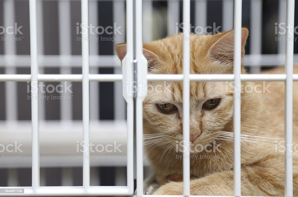Cat in Cage stock photo