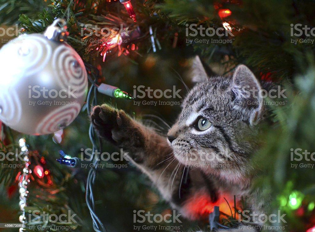 Cat in Christmas Tree stock photo