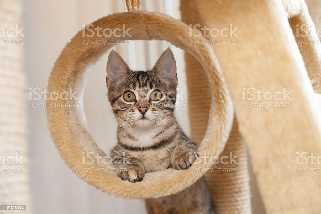 cat in circle stock photo