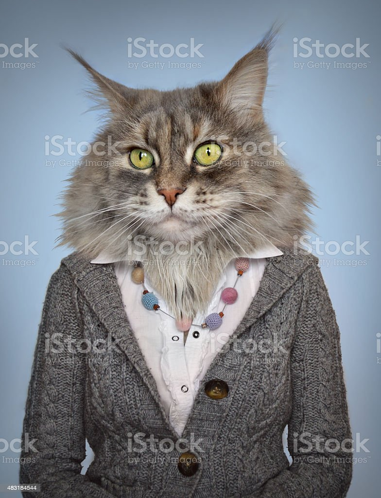 cat in clothes stock photo