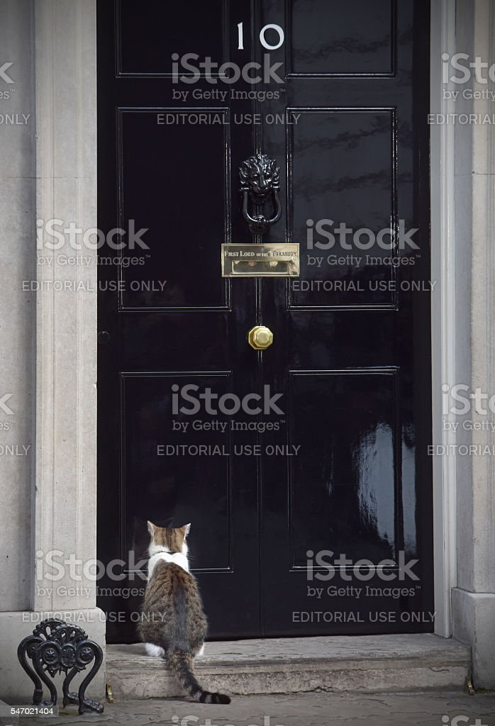 Cat in Downing street stock photo