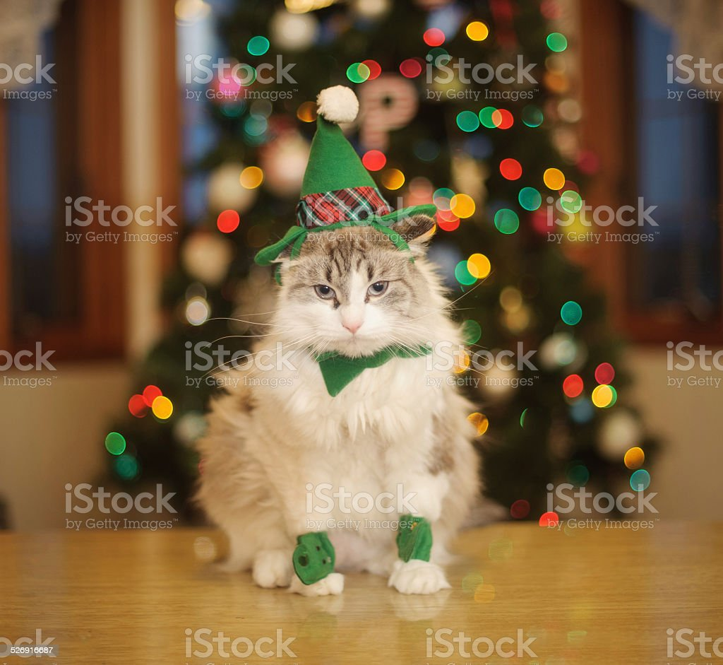Cat in Elf Costume stock photo