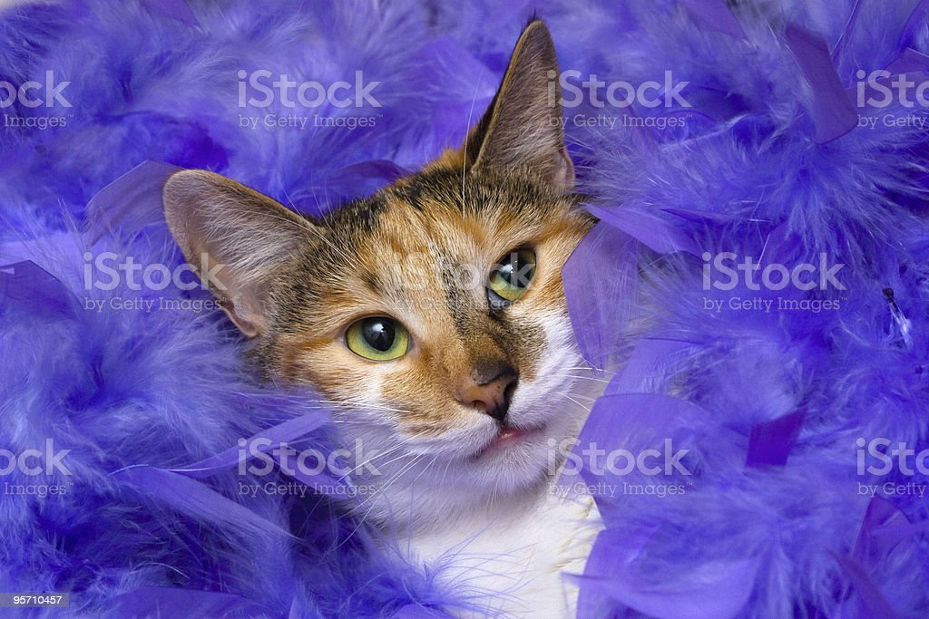 cat in feathers royalty-free stock photo