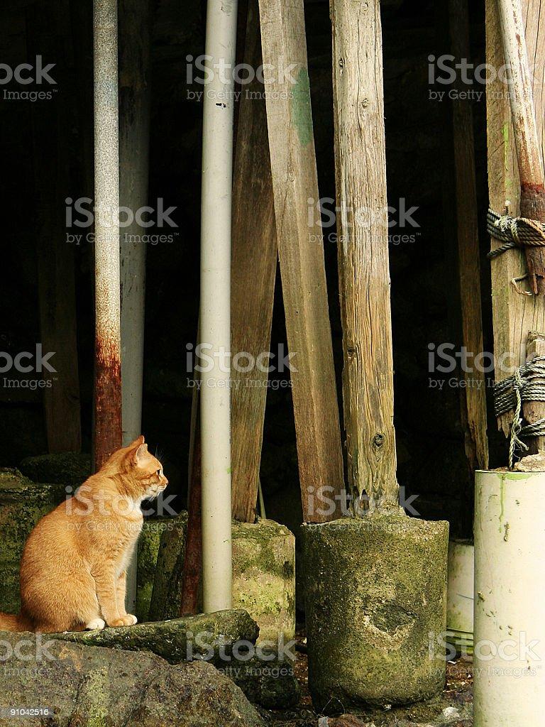 Cat en bases de casas foto de stock libre de derechos