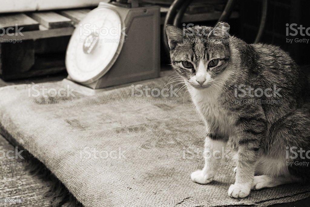 cat frente de una tienda foto de stock libre de derechos